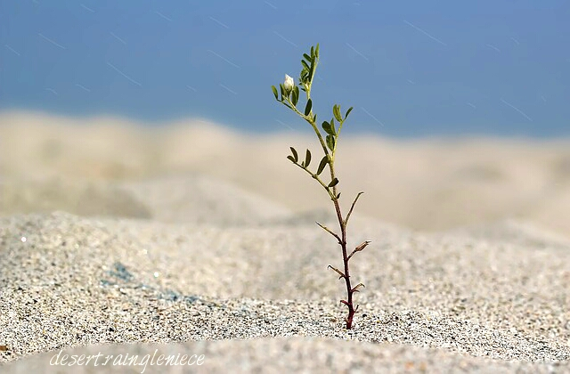 What a Year of Drought Can Teach a Thirsty Wife ~ We are all faced with a choice during our dry spells; wallow in the dust or drink from the Living Water to quench or weary souls. https://vineblossom.wordpress.com